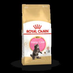 Royal Canin Maine Coon Kitten sausas maistas kačiukams