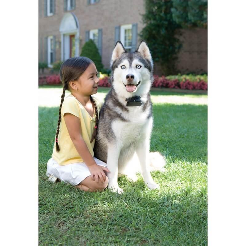 PetSafe nematoma tvora dideliems/nepaklusniems šunims