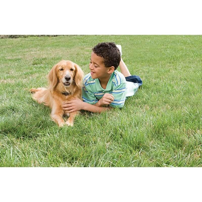 PetSafe nematoma tvora vidutinio dydžio šunims