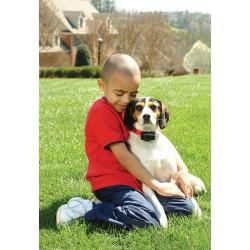 PetSafe antkaklis nuo lojimo/kaukimo su 6 lygių impulsu šunims