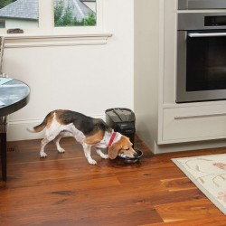 PetSafe PetPod automatinė šertuvė katėms ir šunims