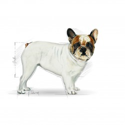 Royal Canin French Bulldog Adult sausas maistas šunims