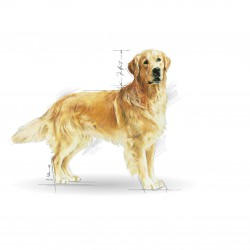 Royal Canin Golden Retriever Adult sausas maistas šunims