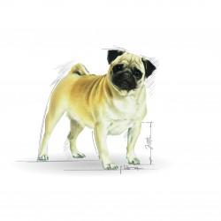 Royal Canin Pug Adult sausas maistas šunims
