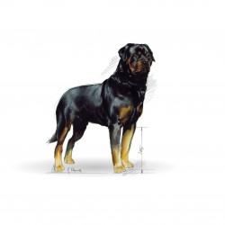 Royal Canin Rottweiler Adult sausas maistas šunims #3