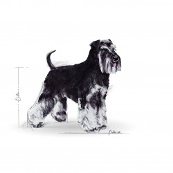 Royal Canin Miniature Schnauzer Adult sausas maistas šunims #3