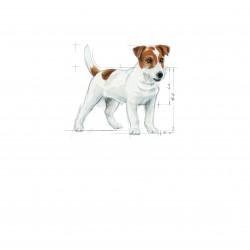 Royal Canin Mini Adult sausas maistas šunims
