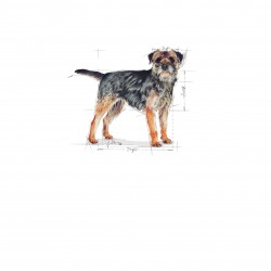 Royal Canin Mini Sterilised Adult sausas maistas šunims