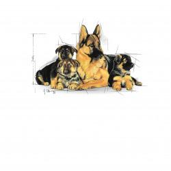 Royal Canin Maxi Starter sausas maistas šunims