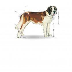 Royal Canin Giant Junior sausas maistas šunims