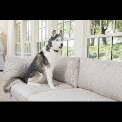 PetSafe Rechargeable Bark Control antkaklis nuo lojimo didelių
